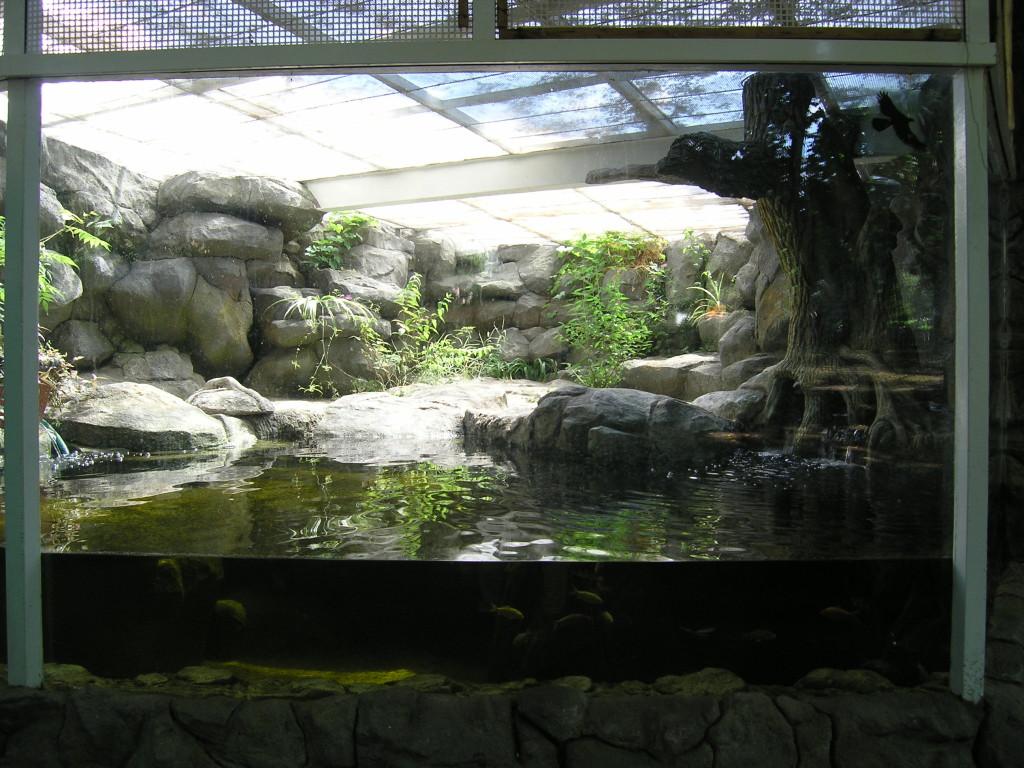 Киевский зоопарк. Медвежий континент - фото 11