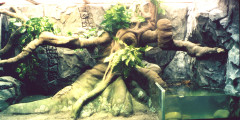 Севастопольский морской Аквариум-Музей. Изображение 5