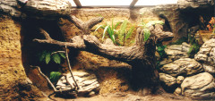 Севастопольский морской Аквариум-Музей. Изображение 7