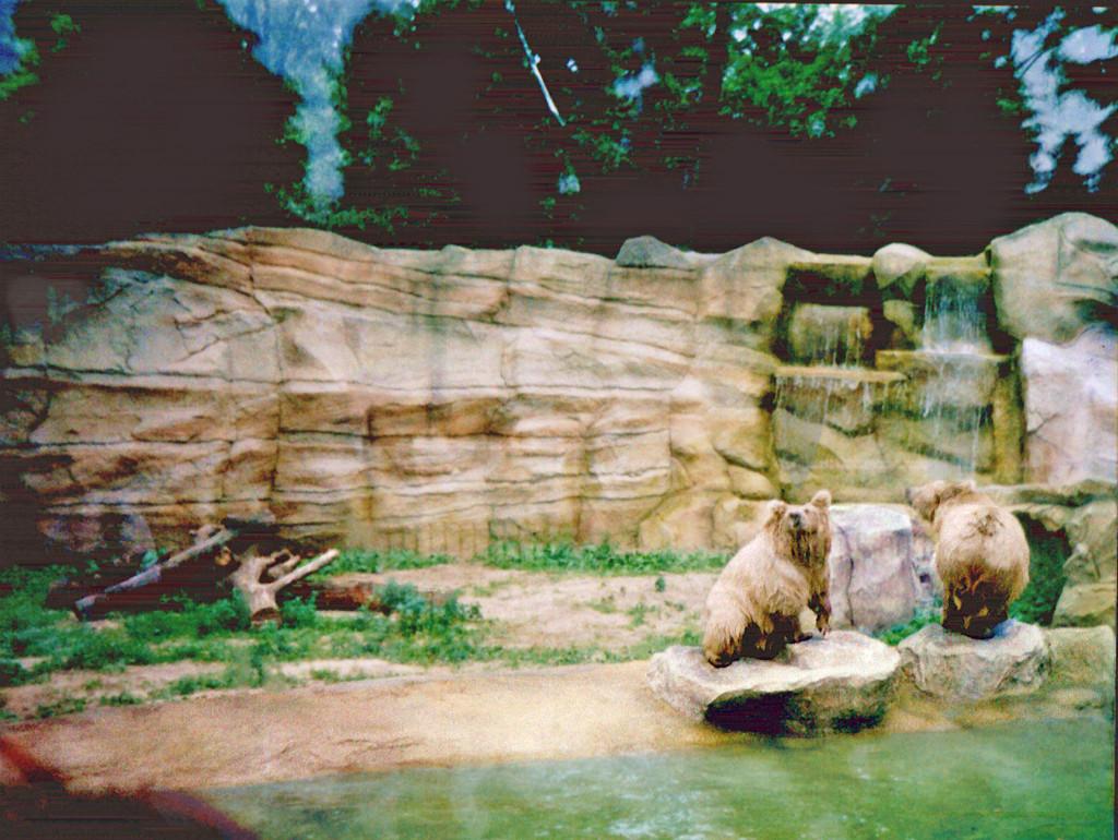 Киевский зоопарк. Медвежий континент - фото 20