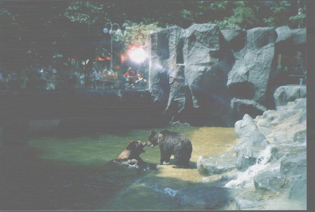 Киевский зоопарк. Медвежий континент - фото 21
