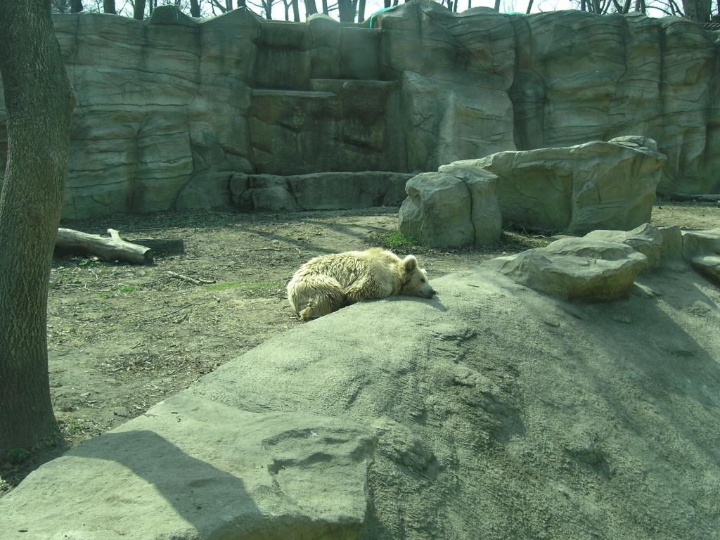 Киевский зоопарк. Медвежий континент - фото 16